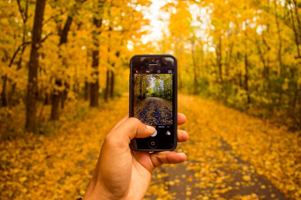 FAQs about social media, symbolised by woodland scene with autumn leaves being photographed on a mobile phone